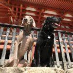 犬用シルバーネックレス ラブラドールレトリバー「桜ちゃん」ワイマラナー「皐月ちゃん」